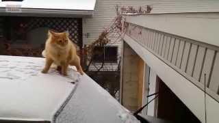 Смешные коты и кошки. Подборка приколов #2