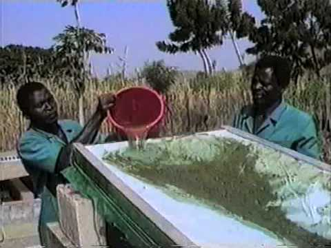 Growing Spirulina Algae in a Village in West Africa