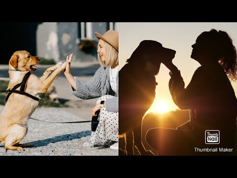 Download DOGS never fail to make us LAUGH - FUNNY DOGS VIDEOS