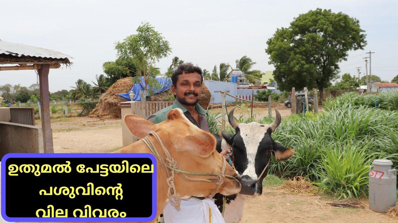 തമിഴ്നാട്ടിലെ പശുവിന്റെ വിലകൾ|cow price and details in tamilnadu|agi tech farming
