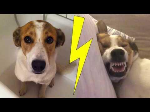 Funny Doy has terrible nightmare!
