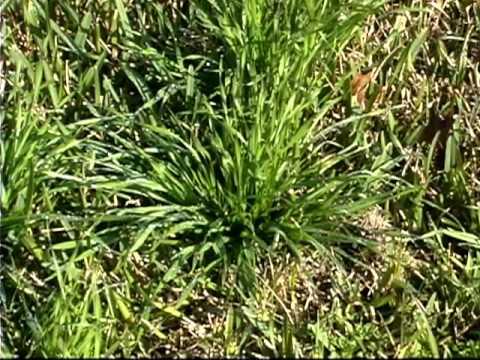 Wipe Away Weeds Mp4 Doovi