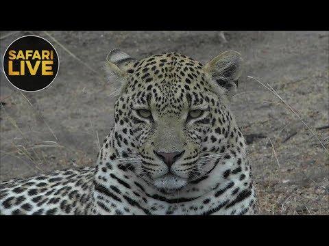 safariLIVE- Sunrise Safari - October 14, 2018