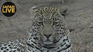 safariLIVE- Sunrise Safari - October 14, 2018