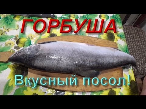 Засолка рыбы в домашних условиях рецепты горбуша