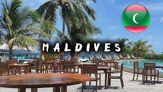 Мальдивы 2021 Плюсы минусы акулы