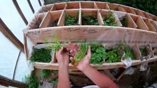 Подготовка растений к продаже из теплицы