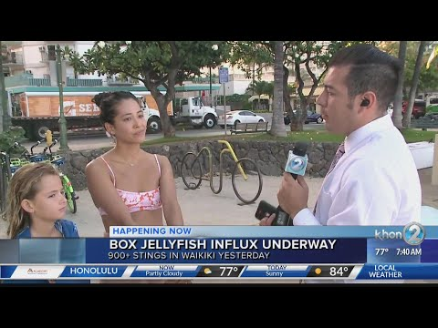 Box Jellyfish Influx Underway