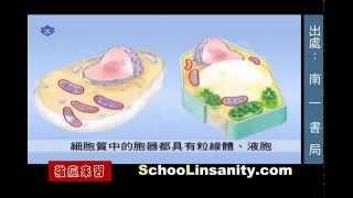 Строение клетки (растительной и животной)