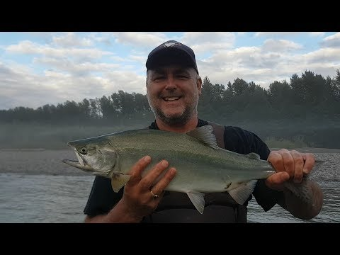 Great Pink Salmon Fly Fishing Trips in BC Canada