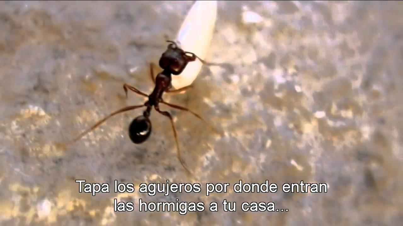 C mo eliminar las hormigas de la casa aprende ahora mismo funnydog tv - Casa de hormigas ...