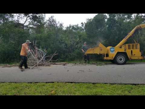 Williams Code Violation Pine Trees Take 2