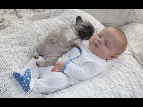 Adorable Pug Puppies Love Babies Compilation  – A Cute Puppy and Baby Videos 2017