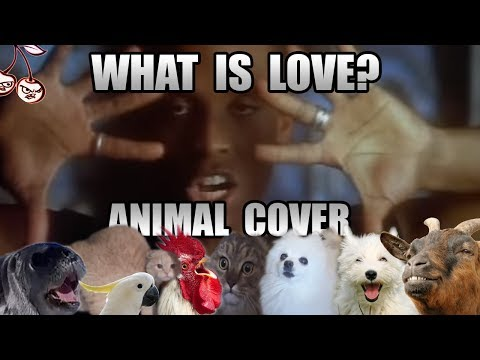 Haddaway - What Is Love (Animal Cover) [only_animal_sounds]