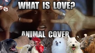 Baixar Haddaway - What Is Love (Animal Cover) [only_animal_sounds]