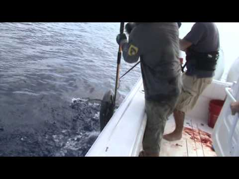 Tuna Trip to 60-Mile Bank, Cayman Islands