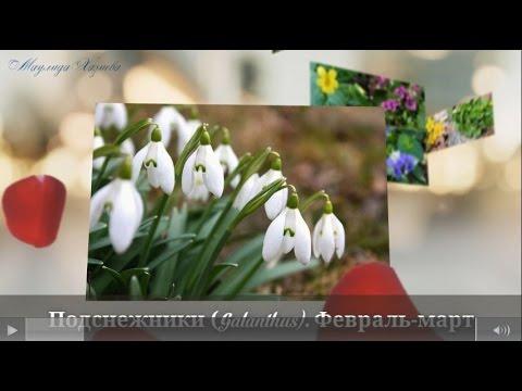Самые первые весенние цветы. Очень красивое видео. The earliest spring flowers