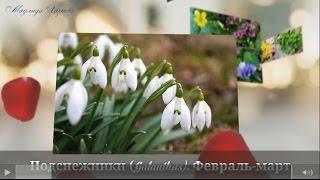 Самые первые весенние цветы. Очень красивое видео. The earliest spring flowers(Самые первые весенние цветы. Очень красивое видео. The earliest spring flowers - https://youtu.be/Cxc9gERMZkk Стань партнером YouTube..., 2016-02-24T21:09:43.000Z)