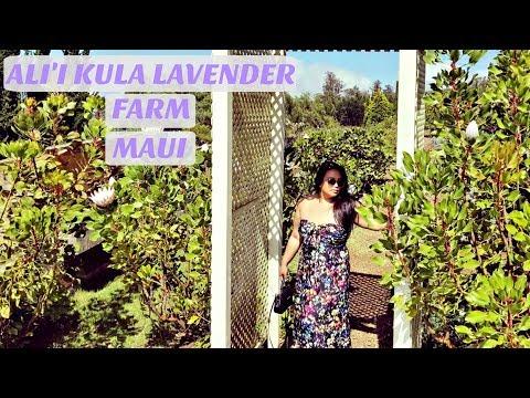 TRAVEL GUIDE: Ali'i Kula Lavender Farm in Maui, Hawaii