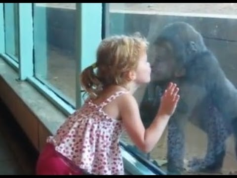 Little Girl Kyla Plays with and Kisses Baby Gorilla- ORIGINAL VIDEO BY FAMILY