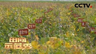 《田间示范秀》 20201216 大田种植有奥秘|CCTV农业 - YouTube
