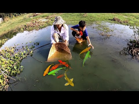 Luckily founding and catching many beautiful and lovely KOI Japan, Ranchu and Oranda