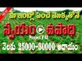 tulsi farming business in telugu| video trendz|small scale industries | ssi