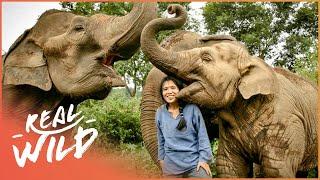 Elephant Whisperer [Elephant Rescue Documentary] | Wild Things