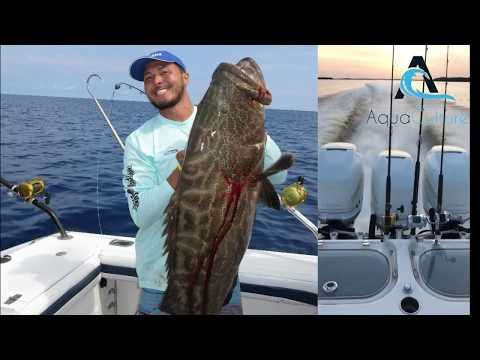 75 lb Black Grouper and Tarpon on Fly in SWFL