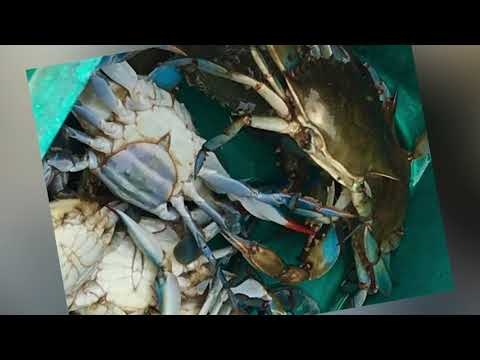 Our Day Out Crabbing on the OBX Sound