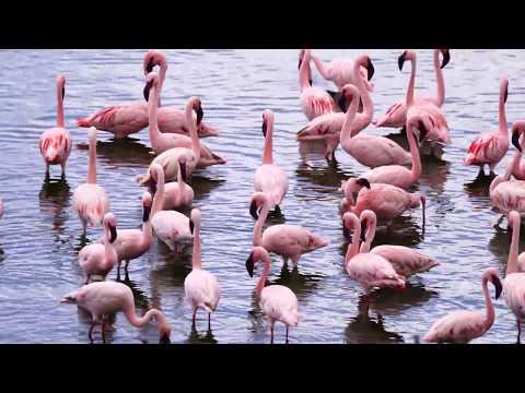 Flamingos @ Arusha National Park