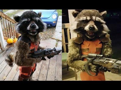 Best halloween costume yet rocket raccoon outfit made by mom goes best halloween costume yet rocket raccoon outfit made by mom goes viral 2015 solutioingenieria Images
