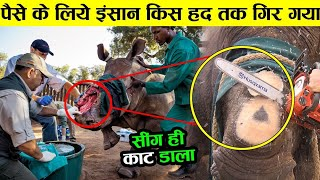 पैसो के लिए इंसान किस हद तक गिर चूका है why rhino removes singh ! animals