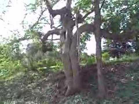 Tree sex video