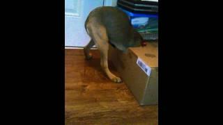 Greedy puppy #3