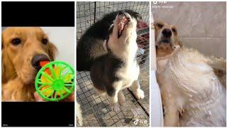Tik tok Trung Quốc - Tik tok động vật - Thư giãn cùng boss cưng đáng yêu [P4]