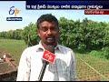Tree transplant Drive by Nallaballi Villagers | Warangal | A Story