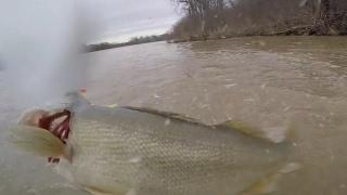 Maumee River Walleye Run April 3, 2017