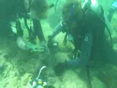 Captain Kidd Wreck Discovery Part I