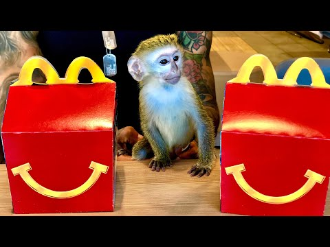 BABY MONKEY'S REACTION TO FIRST MCDONALD'S HAPPY MEAL!!!