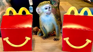 baby-monkey-s-reaction-to-first-mcdonald-s-happy-meal