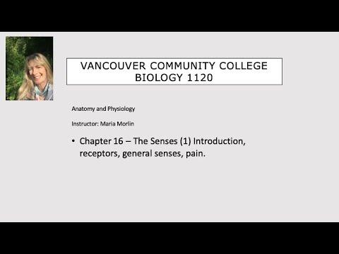 1120 Ch16 Senses (1) intro, receptors, general senses, pain