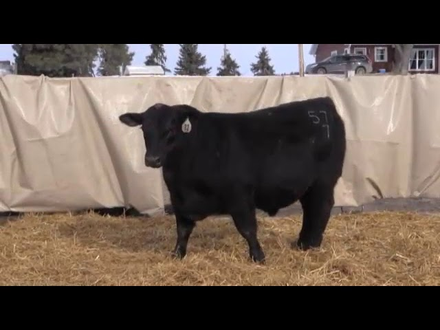 Marcy Cattle Company Lot 72