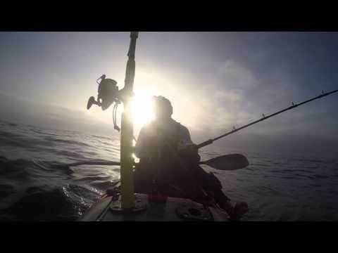 Big Long Reef Kayak Kingfish