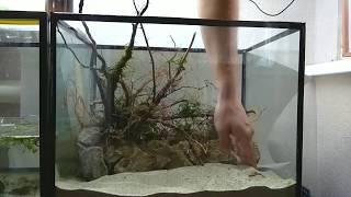 Не обработанная коряга в аквариуме