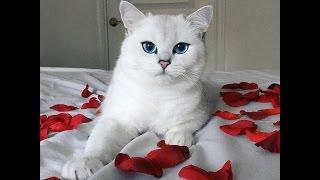 Самые красивые кошки и коты мира!
