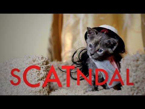 SCANDAL (Cute Kitten Version)