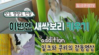 [토끼브이로그] rabbit |애완토끼키우기-새싹보리 …