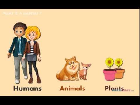 What Is a Habitat? | Science Video for Kids