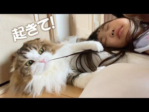 なかなか起きない娘たちを起こす猫